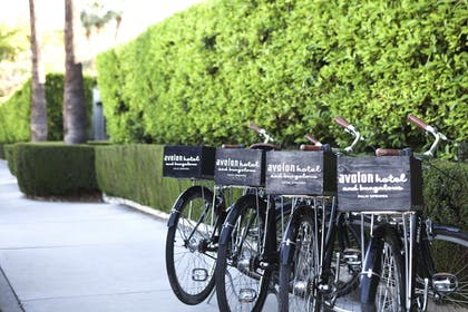 Bicycling | Avalon Hotel and Bungalows Palm Springs