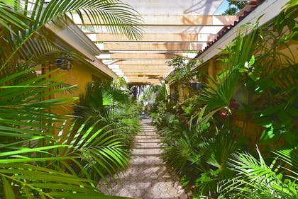 Garden | Turtle Beach Resort and Inn