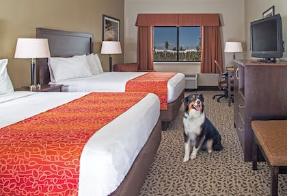 Featured Image | Gray Wolf Inn & Suites