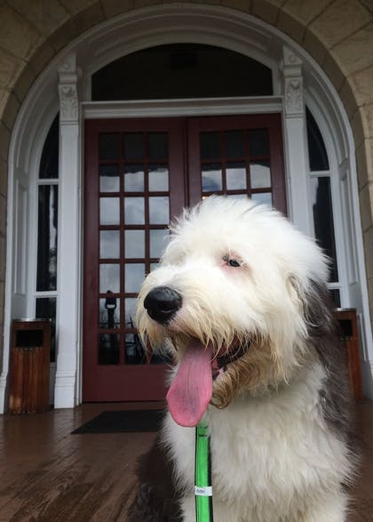 Pet-Friendly | The Crescent Hotel and Spa