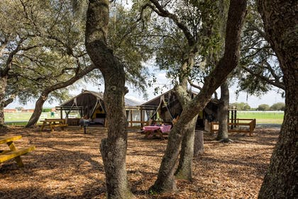 Guestroom View | Westgate River Ranch Resort & Rodeo