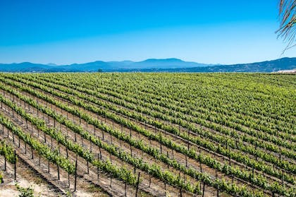 Miscellaneous | Carter Estate Winery and Resort