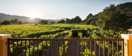 View from Room | Napa Valley Lodge