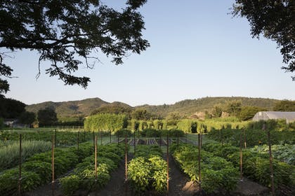 View from Property | Napa Valley Lodge