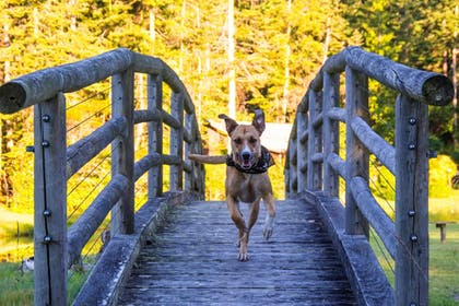Pet-Friendly | Captain Whidbey