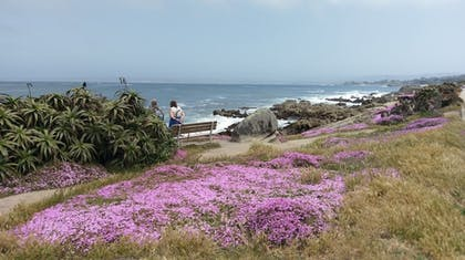 Beach | Pacific Grove Inn