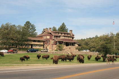 Game Drive | State Game Lodge at Custer State Park Resort