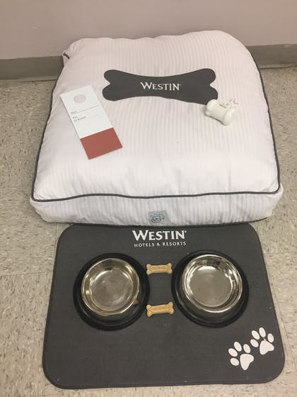 Pet-Friendly | The Westin Annapolis