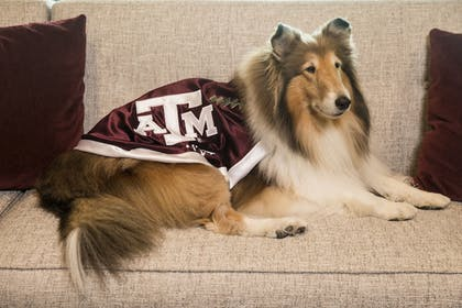 Pet-Friendly | Texas A&M Hotel and Conference Center