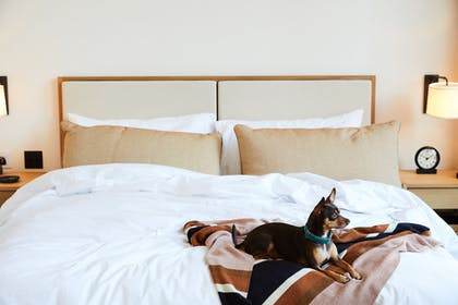 Pet-Friendly | Shinola Hotel