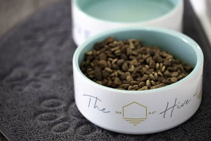 Pet-Friendly | The Hive