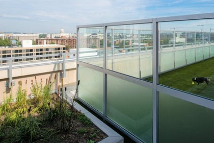 Pet-Friendly | Global Luxury Suites Capitol Hill/Navy Yard